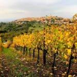 Panorama del Paese di Sant'Angelo all'Esca tra le vigne