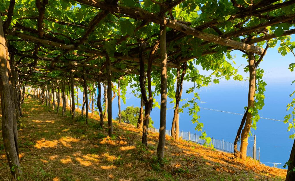 Pergole in costiera amalfitana e vista sul golfo di Salerno presso Marisa Cuomo