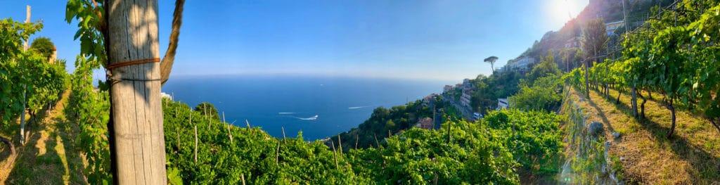 Viticoltura Eroica in costa d'Amalfi sui pendii dei Monti Lattari nella cantina di Marisa Cuomo