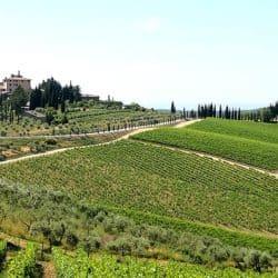 Una visita speciale tra le colline del Chianti Classico
