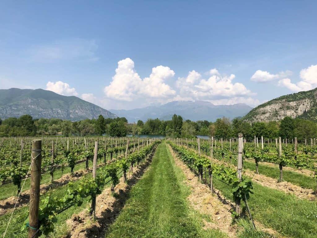Vigne della cantina Bersi Serlini in Franciacorta