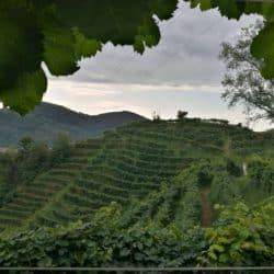 L'importanza di chiamarsi Prosecco. L'identità di una DOCG nei vini di Graziano Merotto