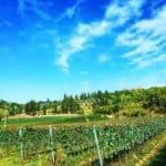 Inserrata Organic Farm, all'insegna del biologico