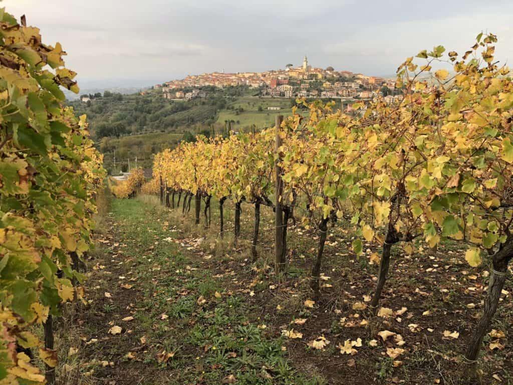 Vigne di Taurasi ed Aglianico in irpinia