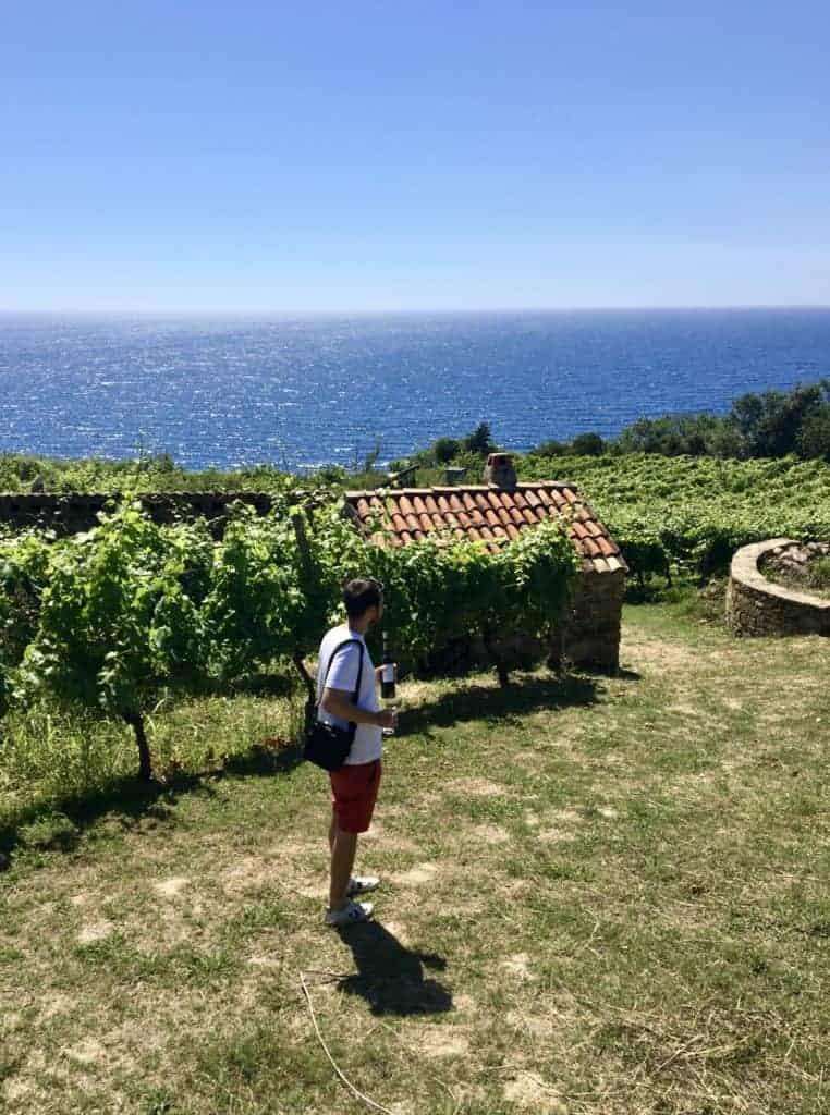 Vista delle vigne dell'Azienda Agricola San Giovanni a Santa Maria di Castellabate