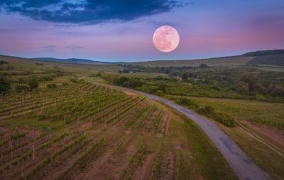 luna vino