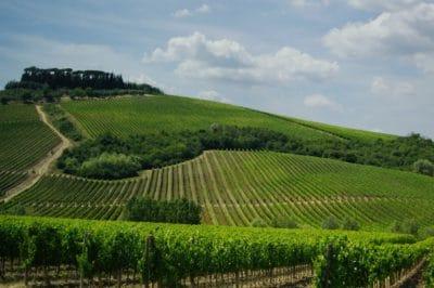 Tuscany Wineyards Photo by Jonathan Skule on Unsplash